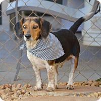 Adopt A Pet :: Finn - Homewood, AL