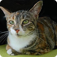 Adopt A Pet :: Autumn - The Colony, TX