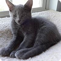 Adopt A Pet :: Grayson - Colmar, PA