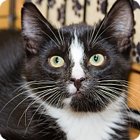 Adopt A Pet :: Perry - Irvine, CA