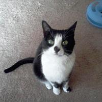 Adopt A Pet :: PEANUT* - Trexlertown, PA