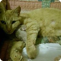 Adopt A Pet :: Ruby - Jefferson, NC