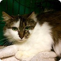 Adopt A Pet :: Jeanie - East Brunswick, NJ