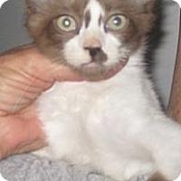 Adopt A Pet :: Holly - Dallas, TX