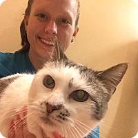 Adopt A Pet :: Snow Queen - McDonough, GA