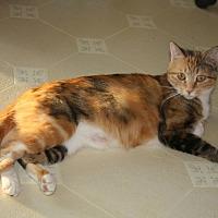 Adopt A Pet :: Nacho - Rawlins, WY
