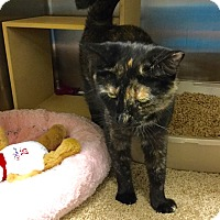 Adopt A Pet :: Wednesday-Adoption Pending! - Colmar, PA