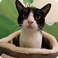 Adopt A Pet :: Kulani - Byron Center, MI