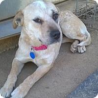 Adopt A Pet :: Candy - Campbell, CA