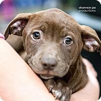 Adopt A Pet :: Annie - Gainesville, FL