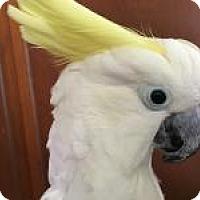 Adopt A Pet :: Baby - Neenah, WI