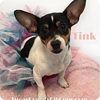 Adopt A Pet :: Tink - Toledo, OH