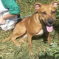 Adopt A Pet :: Rocky - East Hartford, CT