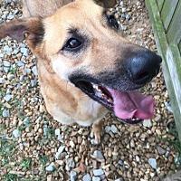 Adopt A Pet :: Cooper - Jackson, MS