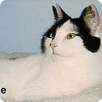 Adopt A Pet :: Adele - Medway, MA