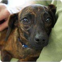 Adopt A Pet :: Carmela - Toluca Lake, CA