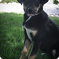 Adopt A Pet :: Honor - Broomfield, CO