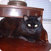 Adopt A Pet :: Hershey - Sarasota, FL