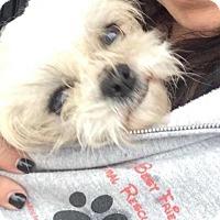 Adopt A Pet :: Claire - Freeport, NY