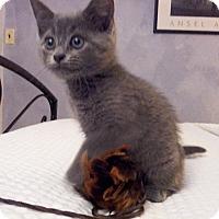 Adopt A Pet :: Milo - Colmar, PA
