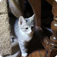 Adopt A Pet :: Lovey - Richmond, VA