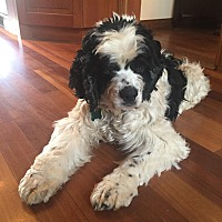 Adopt A Pet :: Willie - Santa Barbara, CA