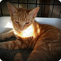 Adopt A Pet :: Kevin - Fairborn, OH