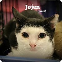 Adopt A Pet :: Jojen - Springfield, PA