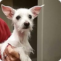 Adopt A Pet :: Trixie - Santa Ana, CA