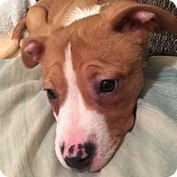 Adopt A Pet :: Buttercup - Sacramento, CA