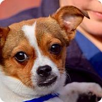 Adopt A Pet :: Portia de Rossi - Brooklyn, NY