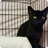 Adopt A Pet :: Licorice - Milwaukee, WI