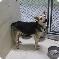 Adopt A Pet :: A01 Alley - Odessa, TX