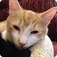 Adopt A Pet :: Hutch - St Paul, MN