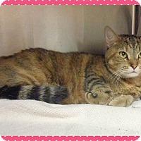 Adopt A Pet :: PRINCESS-available 4/25 - Marietta, GA