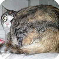 Adopt A Pet :: Marisol - Anchorage, AK