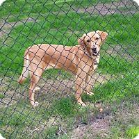 Adopt A Pet :: Lucy (special needs) - Gig Harbor, WA
