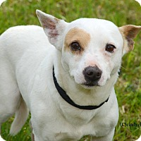 Adopt A Pet :: Ricky - Woodbury, NJ