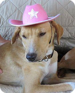 Beagle Mix Dog for adoption in Tulsa, Oklahoma - Annie & Ester ADOPTED
