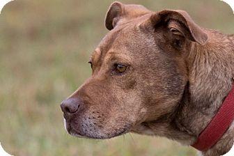 Boxer Mix Dog for adoption in Broken Arrow, Oklahoma - Cocoa