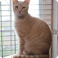 Adopt A Pet :: Sandy - Carlisle, PA