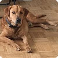 Adopt A Pet :: Scout - Savannah, GA