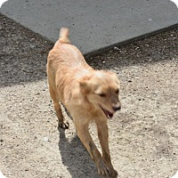 Adopt A Pet :: Suzy Q - Walthill, NE