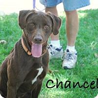 Adopt A Pet :: Chancellor - Minneola, FL