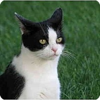 Adopt A Pet :: GOOGLES - Maxwelton, WV