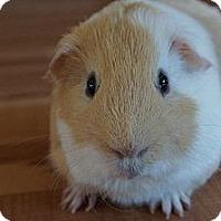 Adopt A Pet :: Howie - Brooklyn Park, MN