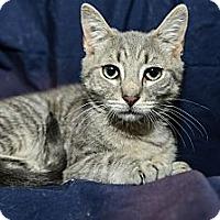 Adopt A Pet :: Krystal - New York, NY