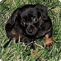 Adopt A Pet :: Almond Joy - San Jose, CA