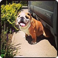 Adopt A Pet :: Meatball - Decatur, IL