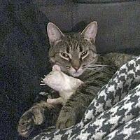 Adopt A Pet :: Katscha - Mississauga, Ontario, ON